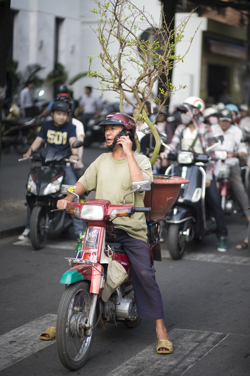 Tree_delivery_guy